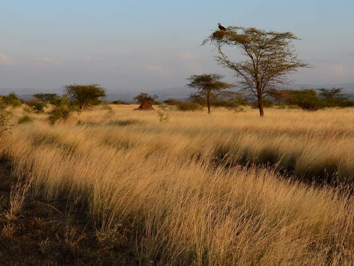 picture description: African grassland Savannah, culture, history and wildlife with ZenAye Ethiopia Tours, Swiss-African expert in tour operation / photo: Linetta Schneller