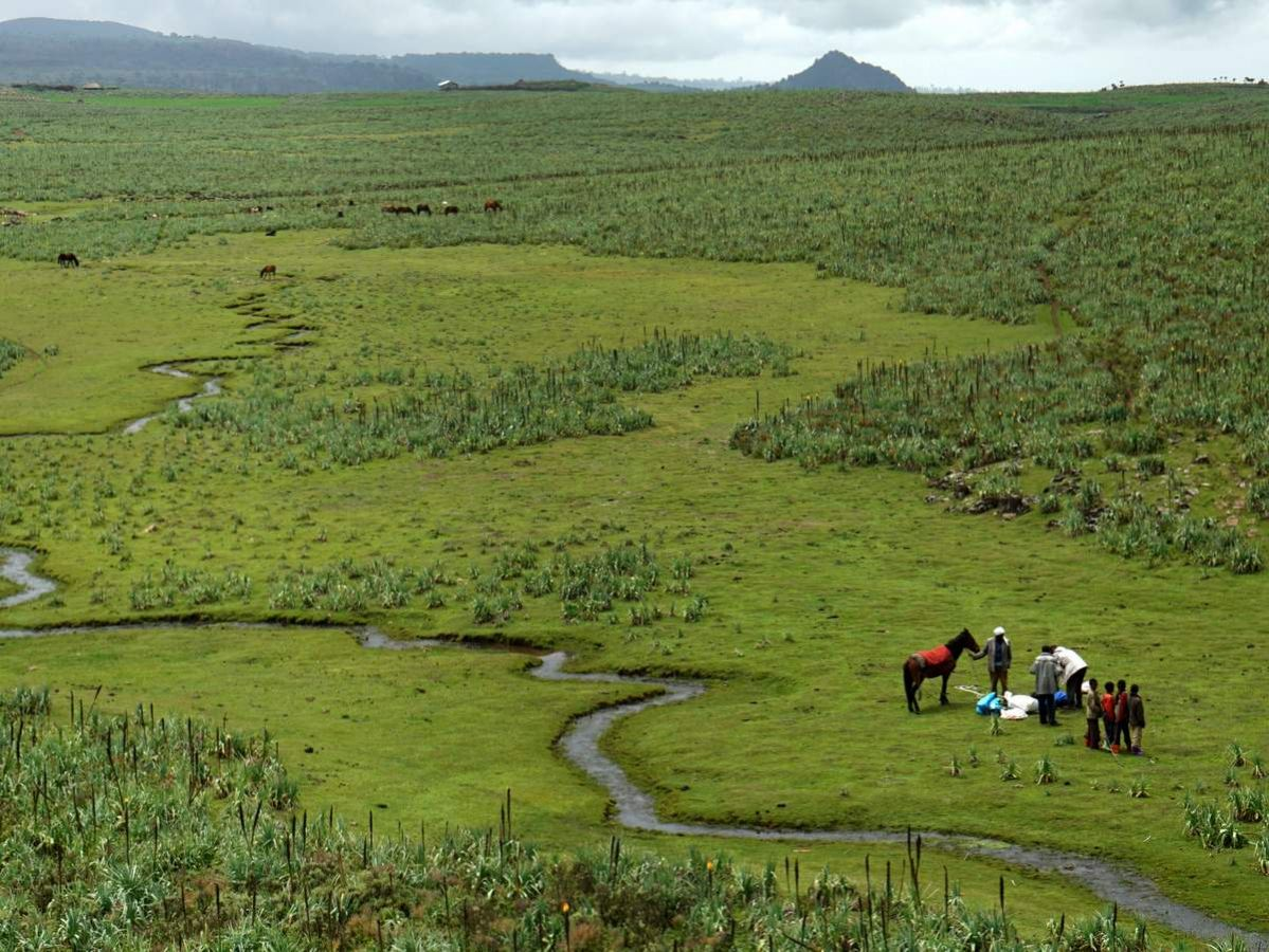 picture description: trekking, horse trek in Bale Mountains National Park with ZenAye Ethiopia Tours, Swiss-African expert in tour operation / photo: Linetta Schneller