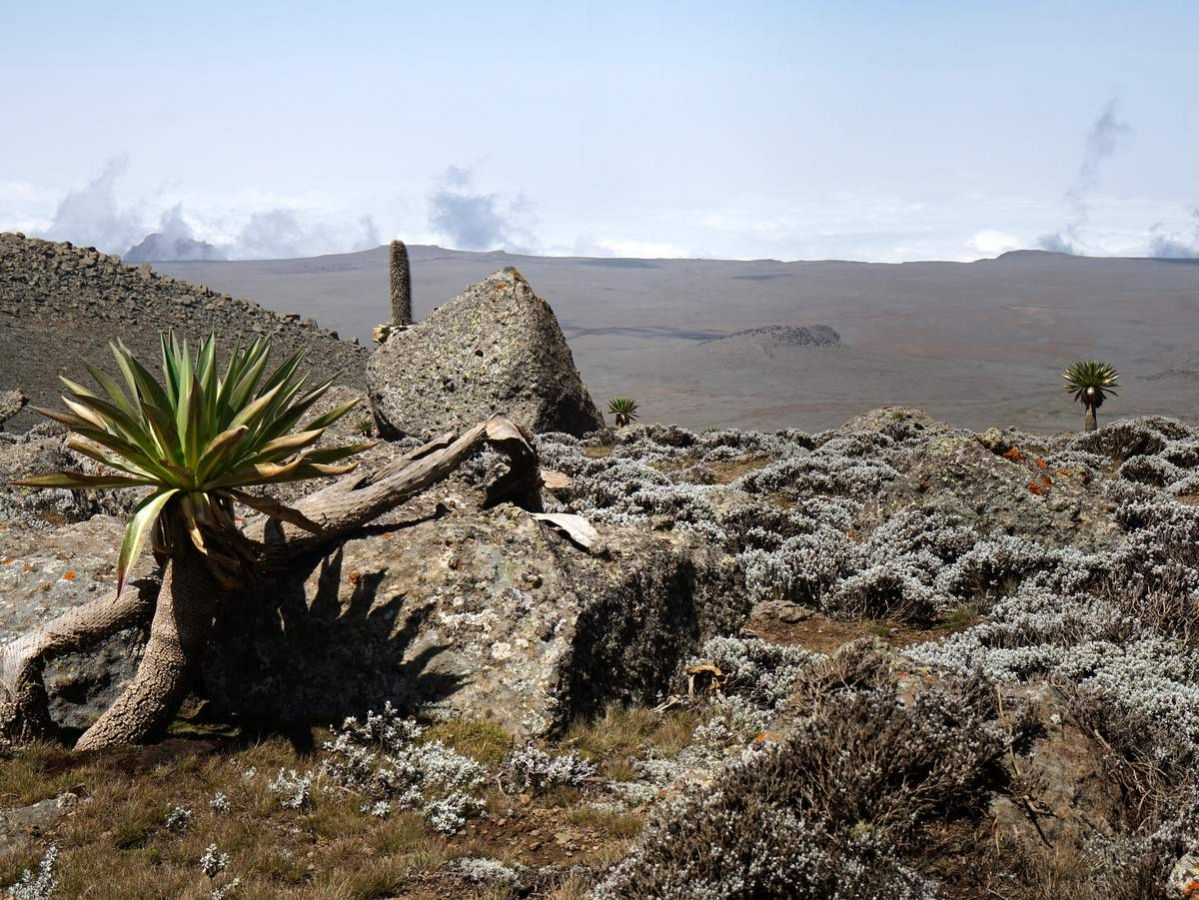 picture description: Sanetti Plateau, Tulu Dimtu, trekking Bale Mountains with ZenAye Ethiopia Tours, Swiss-African expert in tour operation / photo: Linetta Schneller