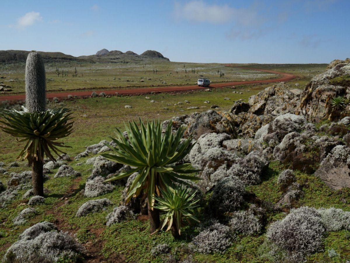 picture description: Sanetti Plateau, trekking in Bale Mountains with ZenAye Ethiopia Tours, Swiss-African expert in tour operation / photo: Linetta Schneller